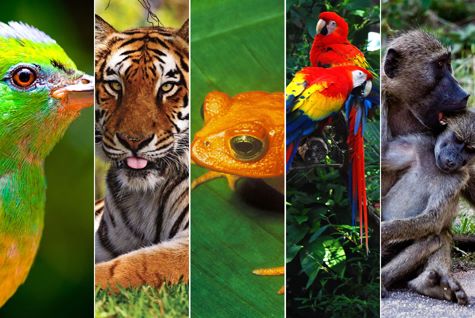 International Day of biodiversity-img