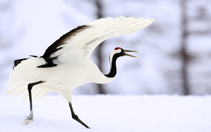 World Day crane.
