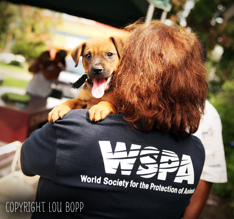 World Society for the Protection of Animals, WSPA